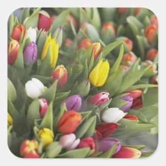 Manojos de tulipanes coloridos pegatina cuadrada