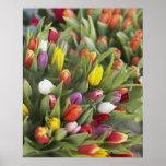 Manojos de tulipanes coloridos póster