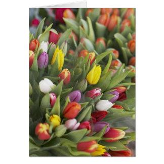 Manojos de tulipanes coloridos tarjeta de felicitación
