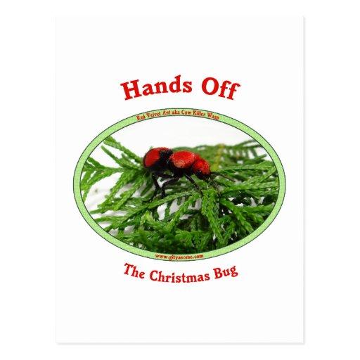 Manos de la hormiga roja del terciopelo del postal