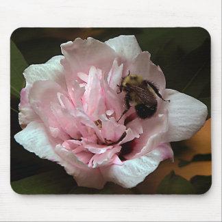 Manosee la abeja en color de rosa de la flor de Sh Tapete De Raton