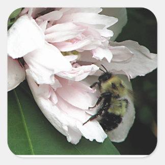 Manosee la abeja en el flor del Peony Colcomanias Cuadradass