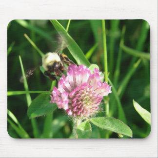 Manosee la abeja en el trébol rojo alfombrilla de raton