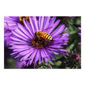 Manosee la abeja en la flor púrpura del aster arte fotográfico
