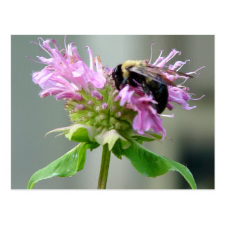 Manosee la abeja en la postal 2 de la flor del bál