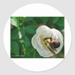 Manosee la abeja etiqueta