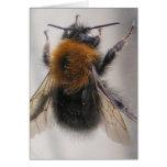 Manosee la abeja felicitaciones