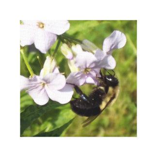 Manosee la abeja impresión en lienzo estirada