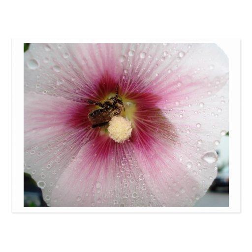 Manosee la abeja postales