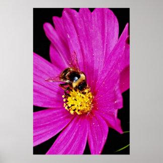 Manosee la abeja que recolecta el polen del flujo  póster