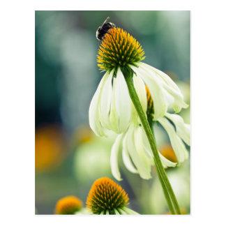 Manosee la abeja postal