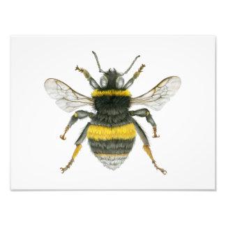 Manosee la impresión de la foto de la abeja