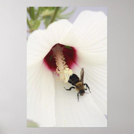 Manosee la impresión de la lona de la abeja posters