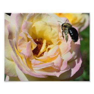 Manosee la naturaleza 10x8 de la abeja en vuelo fotografías