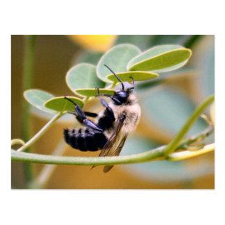 Manosee la postal de la abeja
