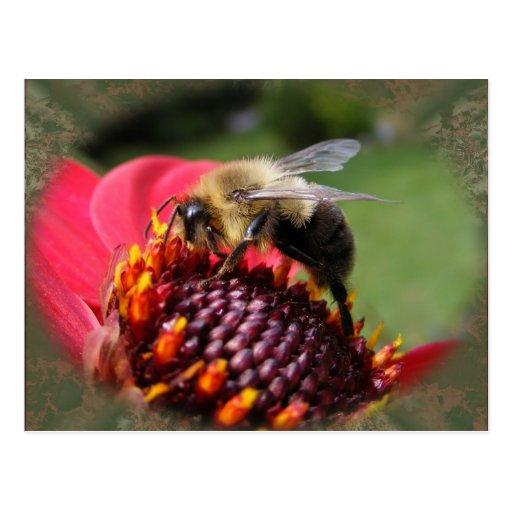 Manosee la postal del ~ de la abeja 195