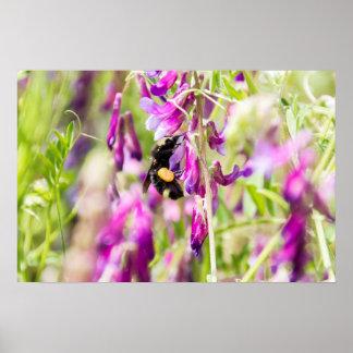 Manosee las flores de polinización del guisante de póster