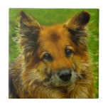 Man's Best Friend #2 Small Square Tile