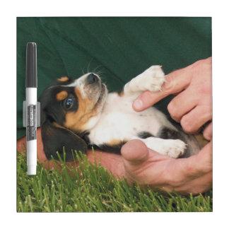 Man's Best Friend Beagle Puppy Dry-Erase Board