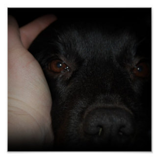 Mans Best Friend Dog Print