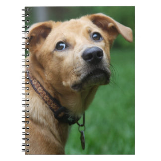 Man's Best Friend Notebooks