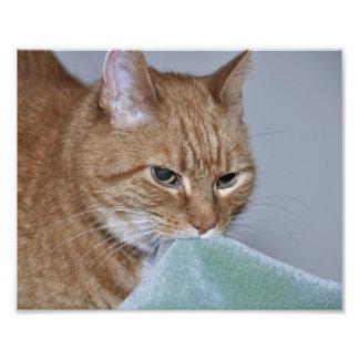 Manta de la seguridad del gato fotografía
