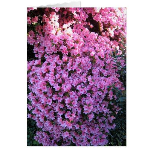 Manta del rosa tarjeta pequeña