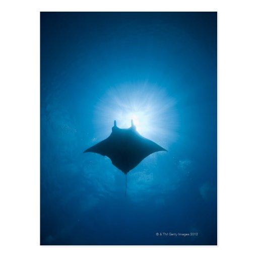 Manta que nada bajo el agua tarjetas postales