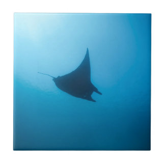 Manta ray blue ocean cleaning station ceramic tile