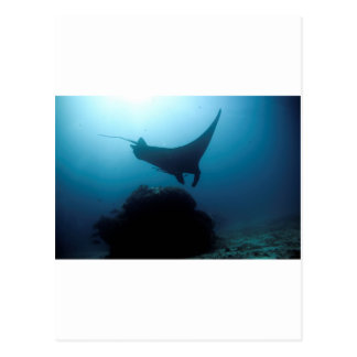 Manta ray blue ocean cleaning station post card