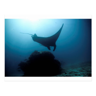 Manta ray blue ocean cleaning station post cards