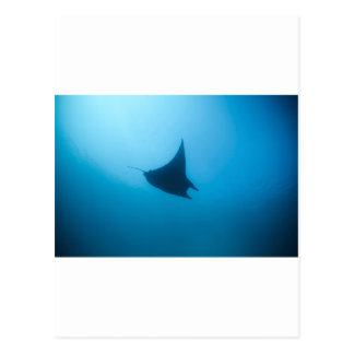 Manta ray blue ocean cleaning station postcard