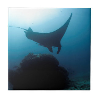 Manta ray blue ocean cleaning station tiles