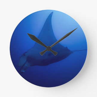 Manta Ray on Great Barrier Reef in Coral Sea Round Clock