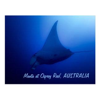 Manta Ray Postcard