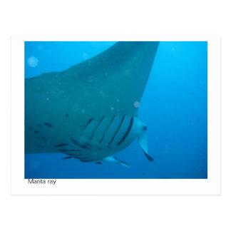 manta ray postcard - 02