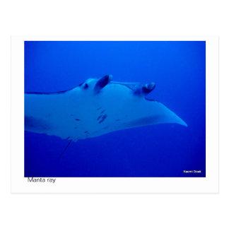manta ray postcard - 03
