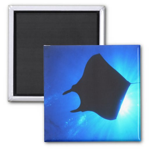 Manta Ray Silhouette 2 Inch Square Magnet