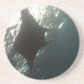 Manta ray swimming overhead sandstone coaster