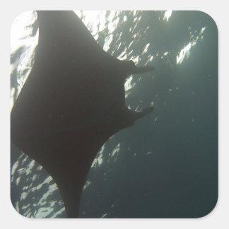 Manta ray swimming overhead square sticker