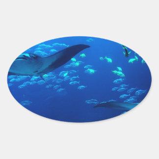 Manta Rays Oval Sticker