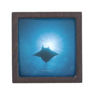 Manta swimming underwater jewelry box