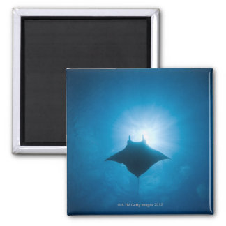 Manta swimming underwater magnet