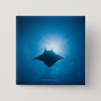 Manta swimming underwater pinback button