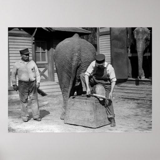 Mantenimiento del pie del elefante, los años 10 impresiones