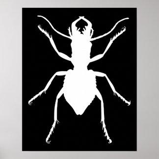 Manticora tuberculata poster