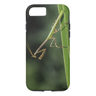 Mantid, Mantidae, adult on palm frond, The Inn iPhone 8/7 Case