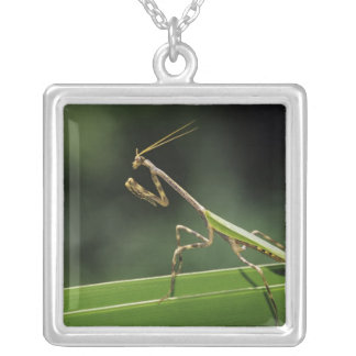 Mantid, Mantidae, adult on palm frond, The Inn Square Pendant Necklace