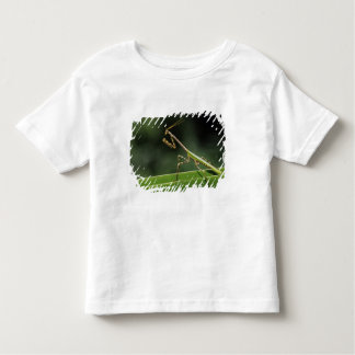 Mantid, Mantidae, adult on palm frond, The Inn T-shirt