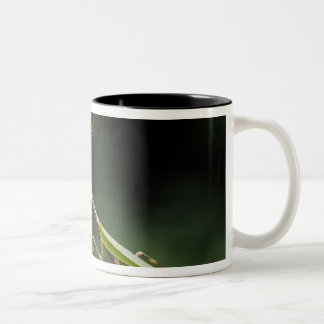 Mantid, Mantidae, adult on palm frond, The Inn Two-Tone Coffee Mug
